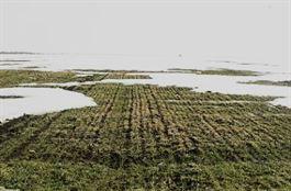 Mii de hectare de terenuri agricole din Braila, afectate de baltiri