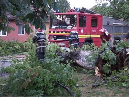 Furtuna a doborat copacii peste masini si garaje si a blocat DN2B si DN22