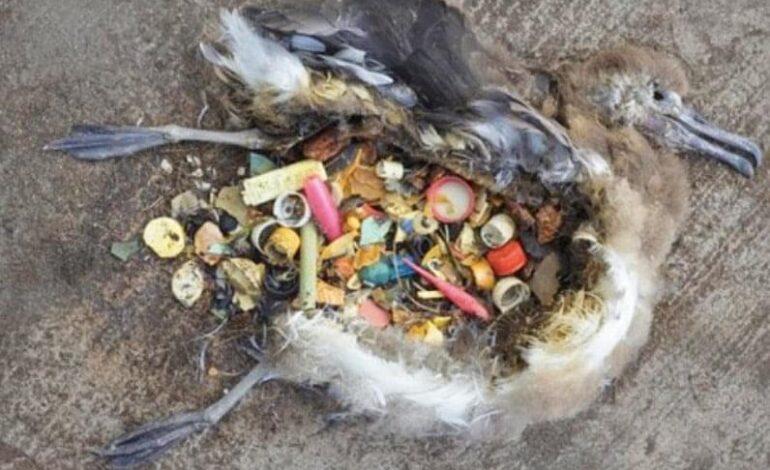 Microplasticele, o amenințare pentru sănătatea vieții animalelor