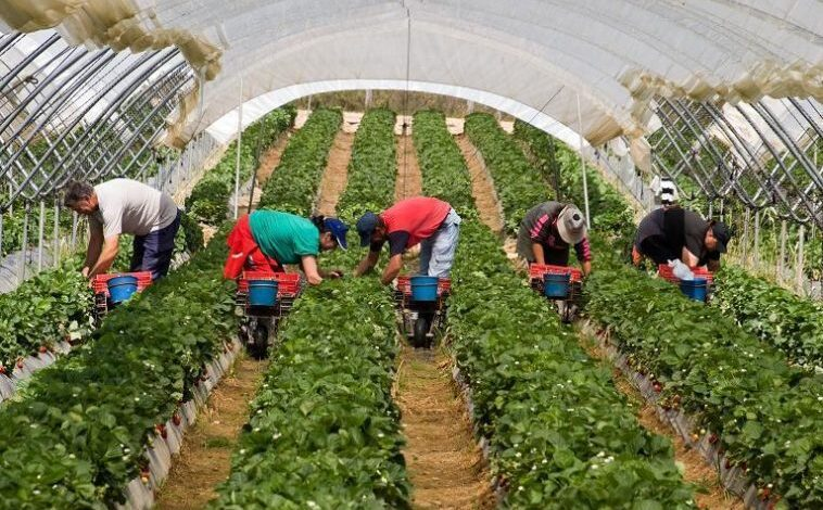 900 locuri de muncă în domeniul agricol (recoltare fructe) în Spania