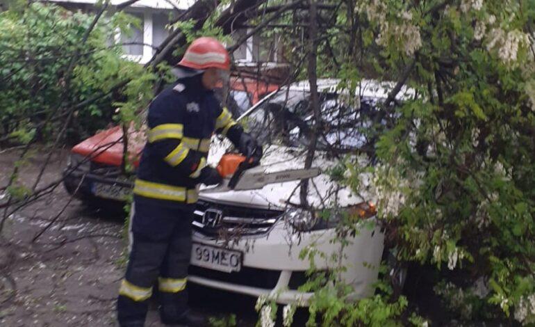 Un copac a avariat trei mașini dintr-o parcare