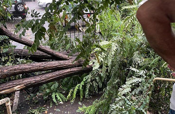 Video: Se continuă degajarea copacilor căzuți în urma furtunii de aseară
