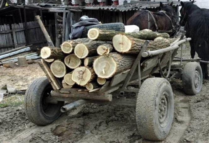 Cercetat pentru furt de material lemnos
