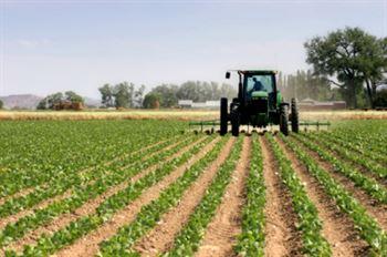 Salariile mici trag Romania la fund, iar agricultura o tine la suprafata