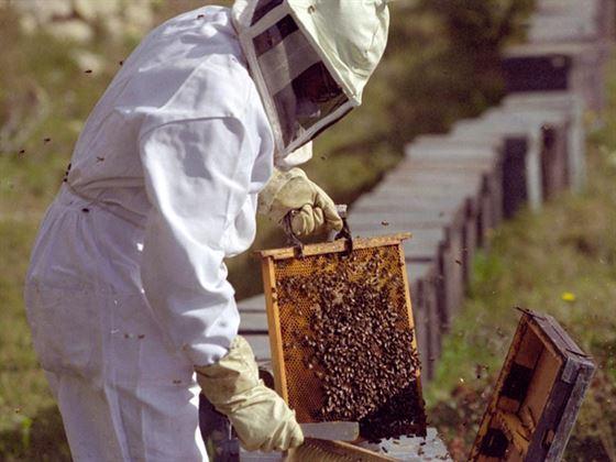 Plafonul impus apicultorilor, mult prea mare ca sa poata accesa fonduri europene