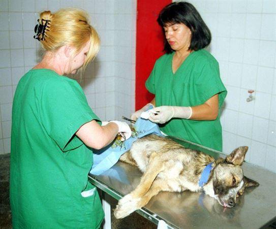 Campania de sterilizare a cainilor cu stapan continua in cartierul Radu Negru