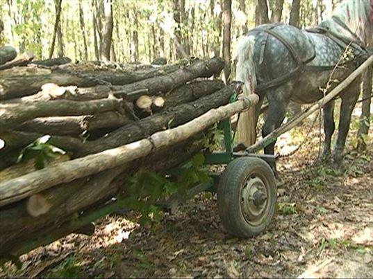 Prinsi cu lemnele furate in caruta