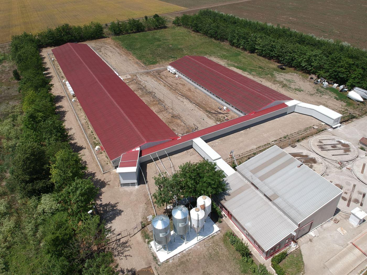 Premium Porc Group investește peste 1,6 milioane euro într-o fermă la Ianca