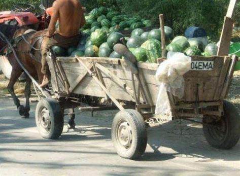 Depistat cu pepenii furați în căruță