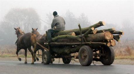 Depistati cu lemnele furate dupa ce au fost implicati intr-un accident rutier