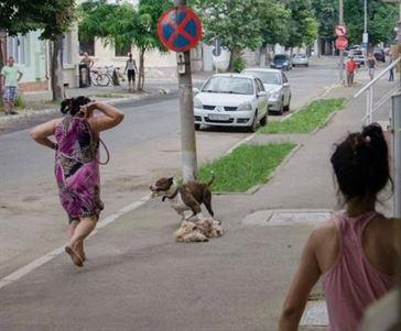 Detinatorul cainelui ucigas de pe strada Golesti a fost amendat cu 500 de lei