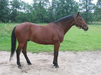 Echitatie cu calul furat din judetul vecin