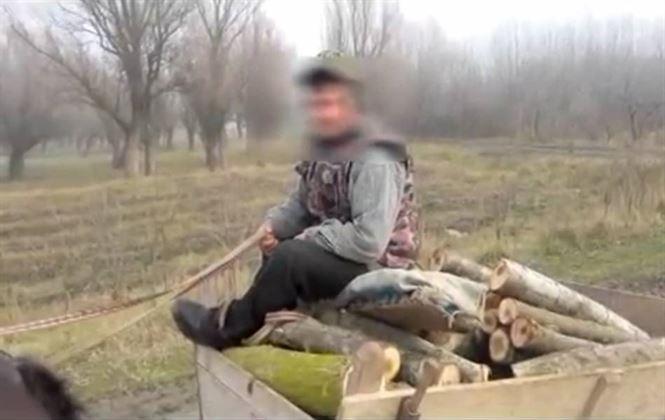 Video: Furt de lemne la Stancuta