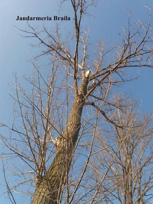 Prinsi de jandarmi in timp taiau un arbore de pe marginea drumului