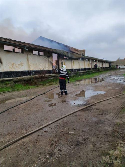 Incendiu la o hală din comuna Dudești