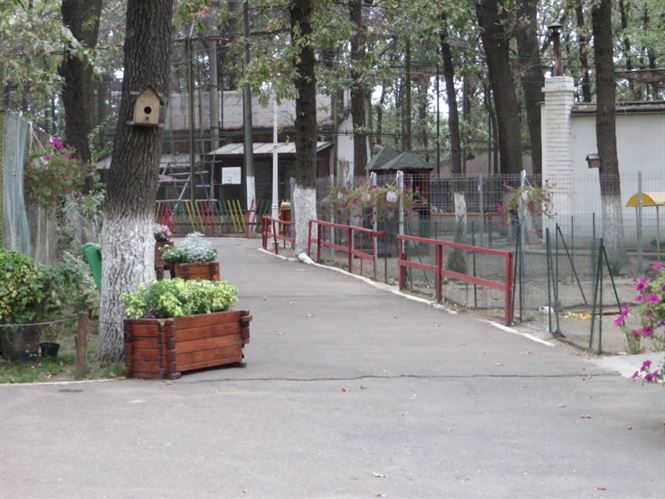 Pestă Porcină Africană confirmată la Parcul Zoo Brăila