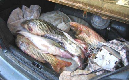 Pește din specia hering confiscat de polițiști de la doi gălățeni