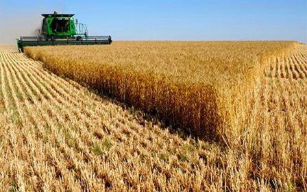 Ploile benefice pentru culturile agricole