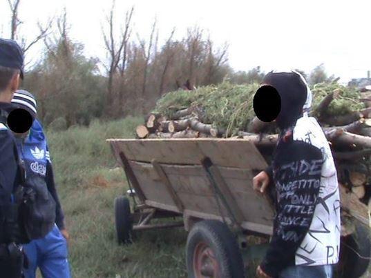 dosar penal pentru sustragere de arbori