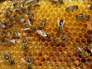 Vesti nu prea bune: Productie mica de miere de albine