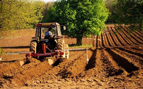 De anul viitor, subventii mai mari cu 25% pentru tinerii fermieri