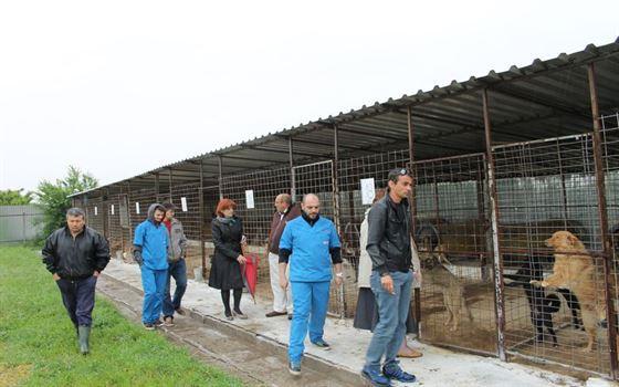 Sprijin pentru cainii comunitari din Braila