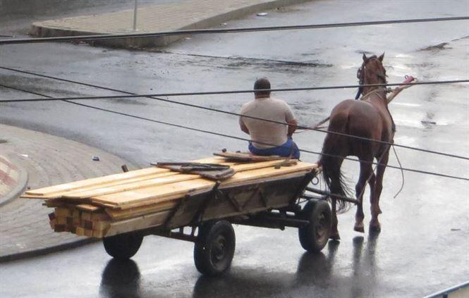 Amendati pentru deplasarea cu vehicule cu tractiune animala pe strazile din municipiul Braila