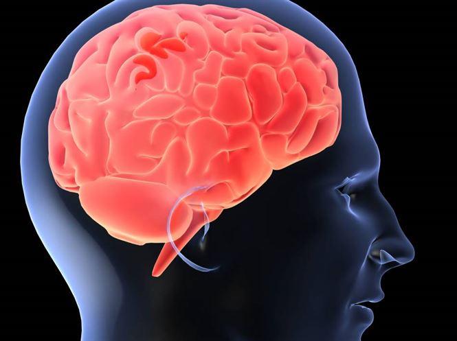 24 de lucruri esentiale despre creierul tau