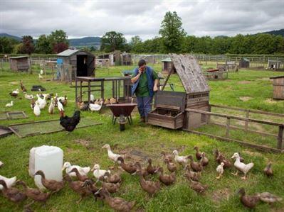 Fermele mici trebuie sa evolueze spre fermele de familie