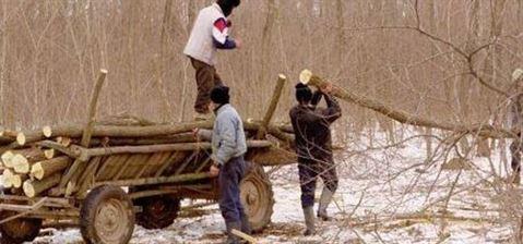 Doi braileni furau lemne din Covasna