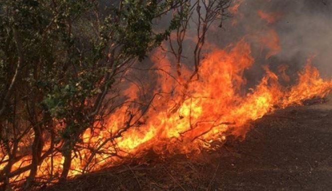 Incendiu în Insula Mică a Brăilei