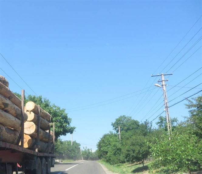 Sapte metri cubi de lemne confiscati