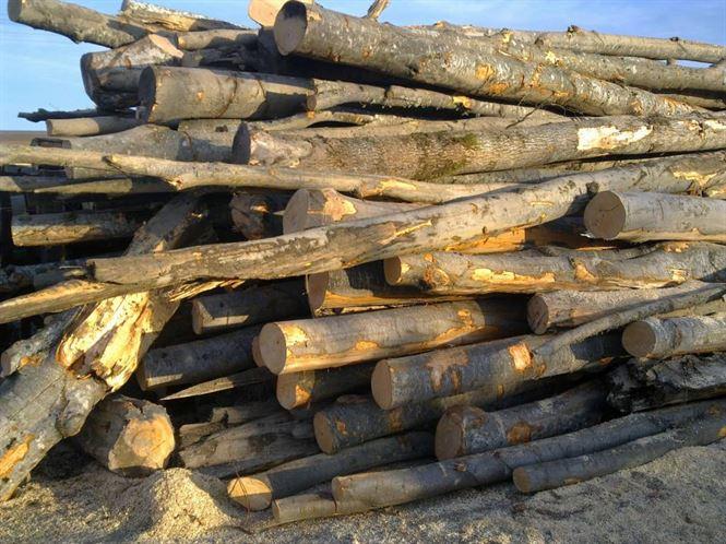 In drum spre Calarasi s-a oprit cu lemnele la Mircea Voda
