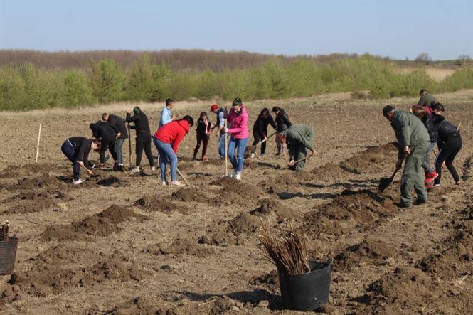 80 de elevi au participat la o acțiune de plantare a 5000 de pomi