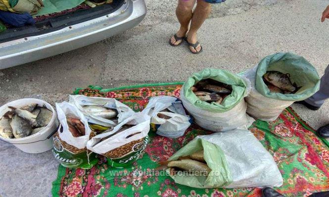 Galerie foto: Dosar penal pentru un transport de peşte fără documente legale