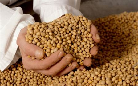 Pretul pentru soia, in crestere pe fondul scaderii rezervelor