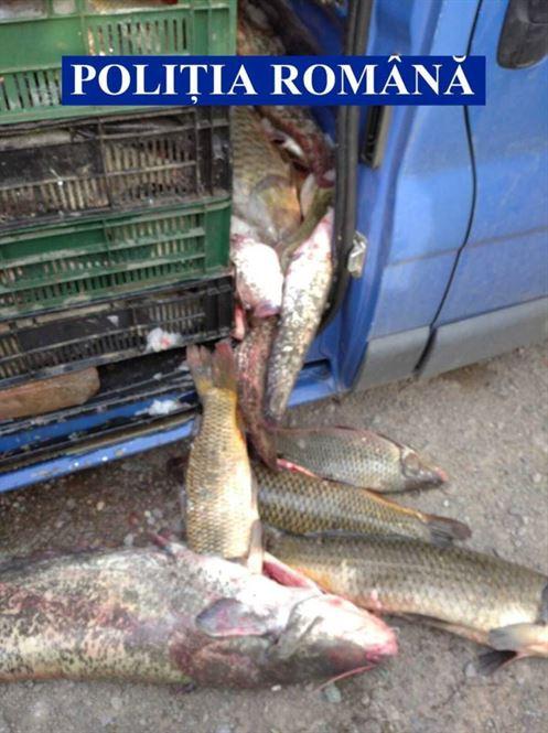 Pește confiscat în perioada de prohibiție