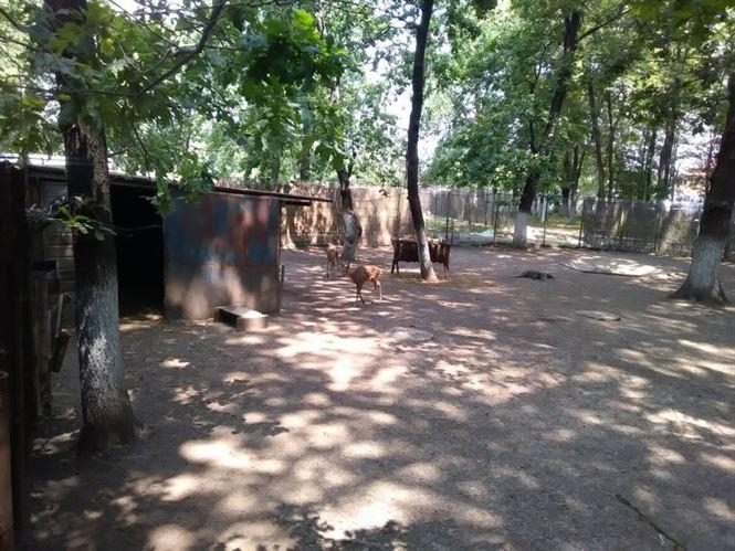 Subvenție de 700.000 lei de la CLM pentru Grădina Zoologică